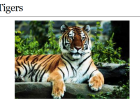 Webquest: Tigers | Recurso educativo 35329