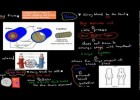 MB.2.6. Structure and function of blood vessels (HSC biology) | Recurso educativo 113812