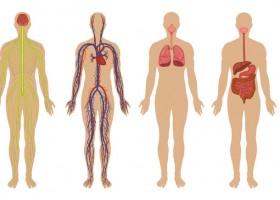 Aparatos y sistemas del cuerpo humano Recurso educativo